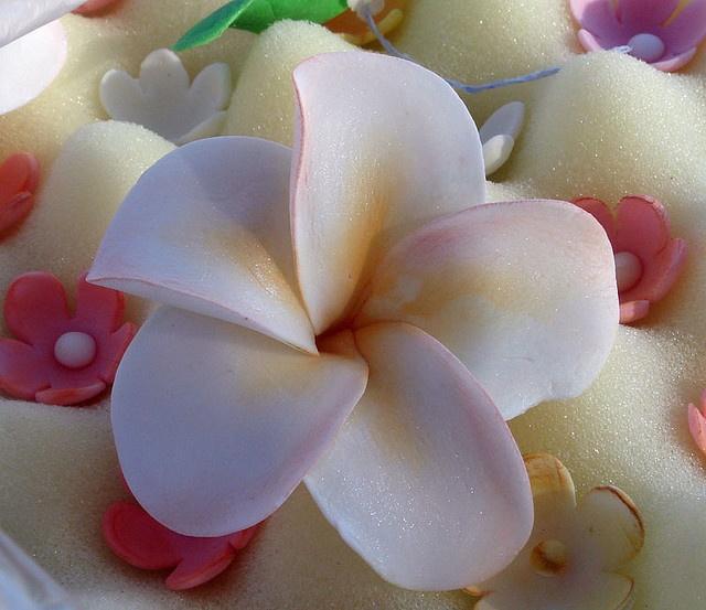 Plumeria gum paste flower.