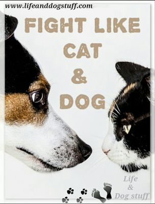 Fight Like Cat and Dog at Life and Dog stuff blog!