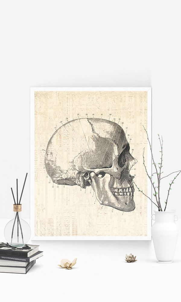 Vintage skull diagram print medical anatomy wall art home vintage skull diagram print medical anatomy wall art home decoration scientific skull illustration in a vintage script paper st all things retro ccuart Image collections