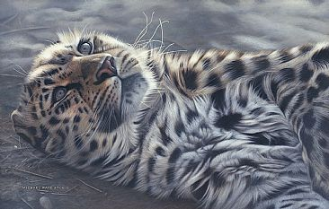 A Perfect World - Amur Leopard - Limited edition giclée watercolour paper print of A Perfect World is available for $199.00 framed. by Michael Pape