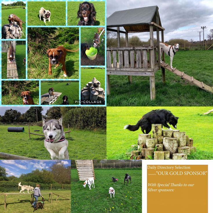 Wild And Free Dog Meadows Fordingbridge Mill Damfind Out More Or Book Www Wildandfreedogmeadows Co Uk Secure Off Lead Dog Dog Play Area Dog Leads Dog Walking