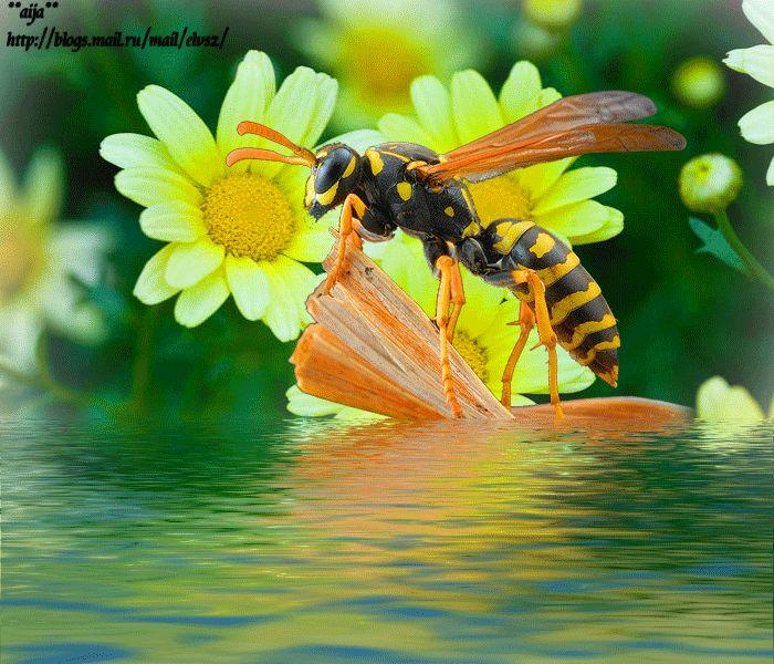 пчелка фото гиф