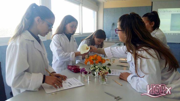 1º #SecundariaISP en #LaboratorioISP para estudiar el reino vegetal. #InteligenciaNaturalistaISP colegiosisp.com