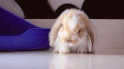 19 choses que tous les propriétaires de lapins comprendront