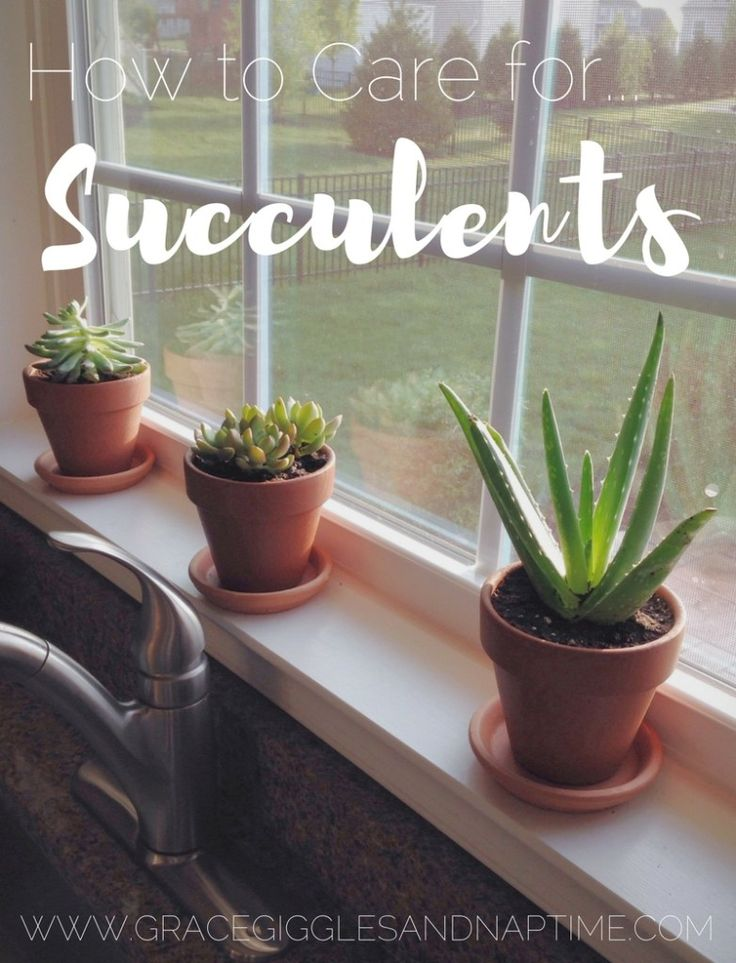 Brighten up your kitchen windowsill or outdoor patio: How to Care for Succulents