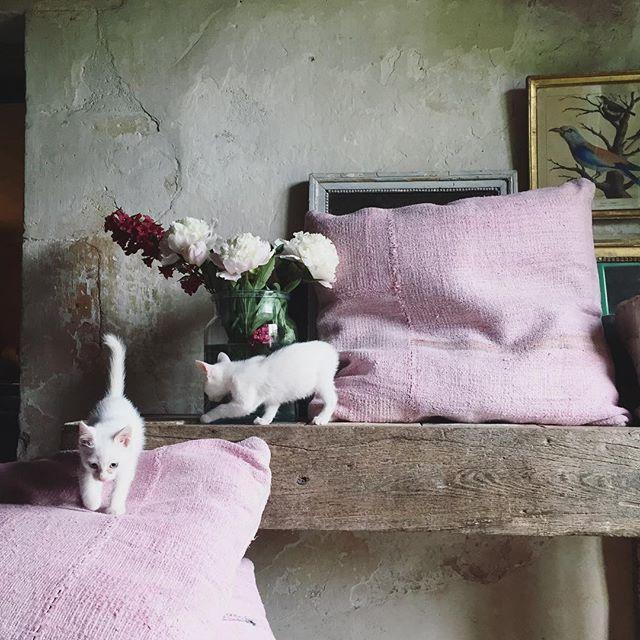 Visite chez la voisine @mathilde4916 - Nouvelle Co de ses coussins #cushion#countryside#decoration#cotépierre#mathildelabrouche