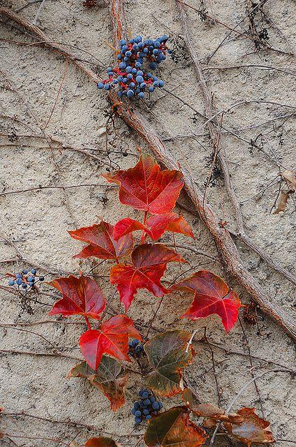 **autumn leaves