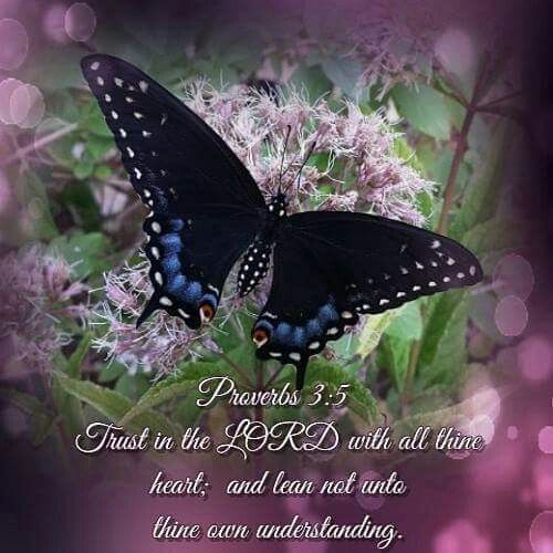 309 Best Images About More Butterfly Bible Quotes On