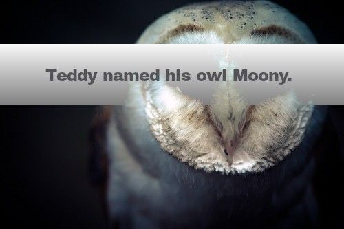 style online shopping Teddy named his owl Moony without knowing it was his dad  s nickname