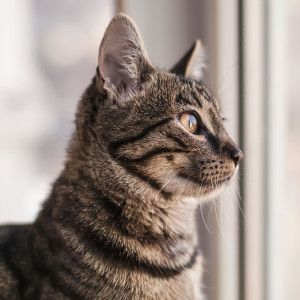 How do I help my cats adjust to new surroundings? #Pets #Pets #SouthAfrica
