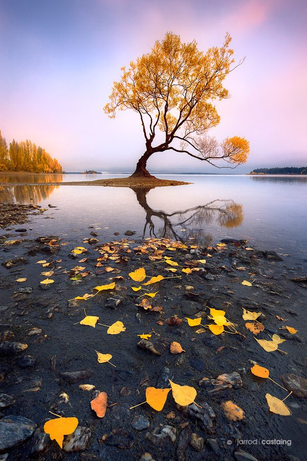 """Wanaka - Morning mist over a popular tree at Lake Wanaka, New Zealand. Excited to return in just a few short weeks :)  <a href=""""http://www.jarrodcastaing.com/workshops"""">2017 Photo Workshops & Tours</a> <a href=""""http://www.jarrodcastaing.com/contact.php"""">Image Licensing</a> <a href=""""http://www.jarrodcastaing.com/gallery"""">Buy a Print</a> <a href=""""http://jarrodcastaing.com/gallery"""">Landscape Photography</a>  Follow on <a href=""""http://instagram.com/jarrodcastaing"""">Instagram</a> Follow on <"""