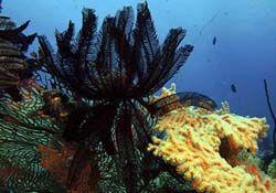 Koh Lipe Coral