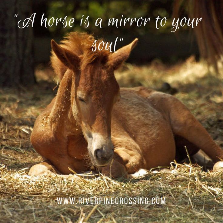 """""""A horse is the mirror to your soul."""""""