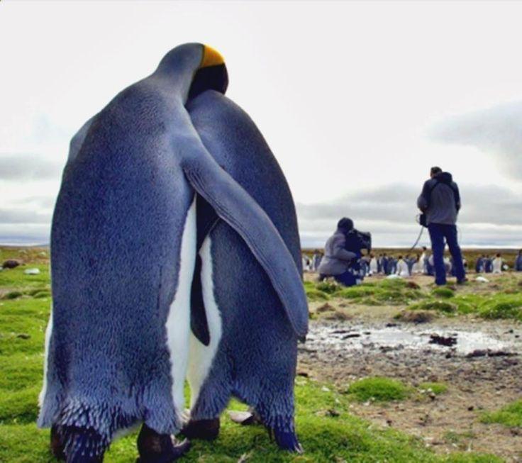 (@_@) Sonríe y pásala bien con memes para facebook en español graciosos de animales, imagenes divertidas de club penguin, imagenes graciosas para un amor, las mejores imagenes divertidas para facebook y chistes de pepito redmau. ➦➦➦ http://www.diverint.com/memes-chistosos-en-espanol-todo-el-mundo-puede-ser-jesus/