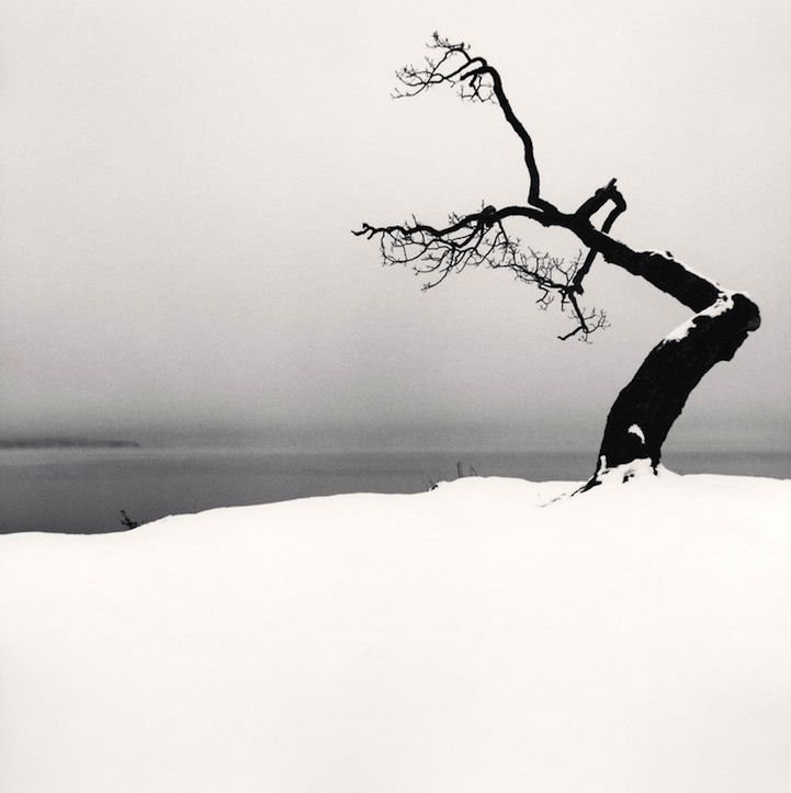 Beautiful Black and White Photos of a Sideways Japanese Tree by Michael Kenna - My Modern Met