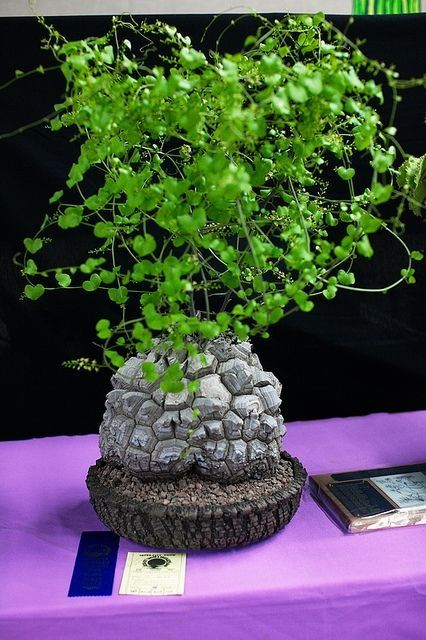 3869 best plants cool unusual impressive or beautiful for Rare bonsai species