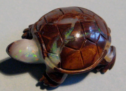 Best turtles images on pinterest turtle and opal