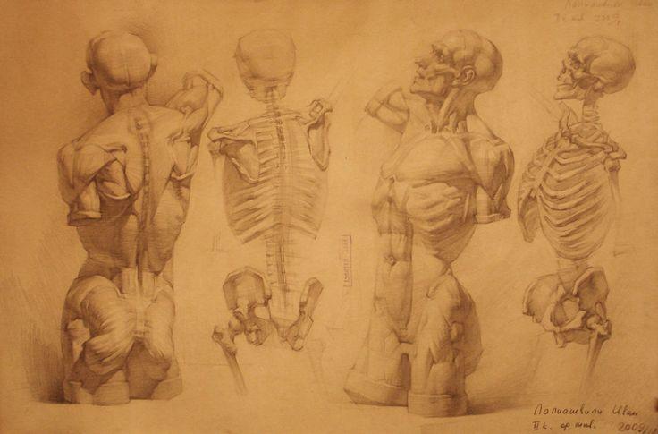 human anatomy 22 by ivany86 on deviantART