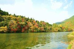 岐阜県関市板取白谷ダム昨年から話題の根道神社のモネの池の近くです 紅葉  自家焙煎カフェカーダモン tags[岐阜県]