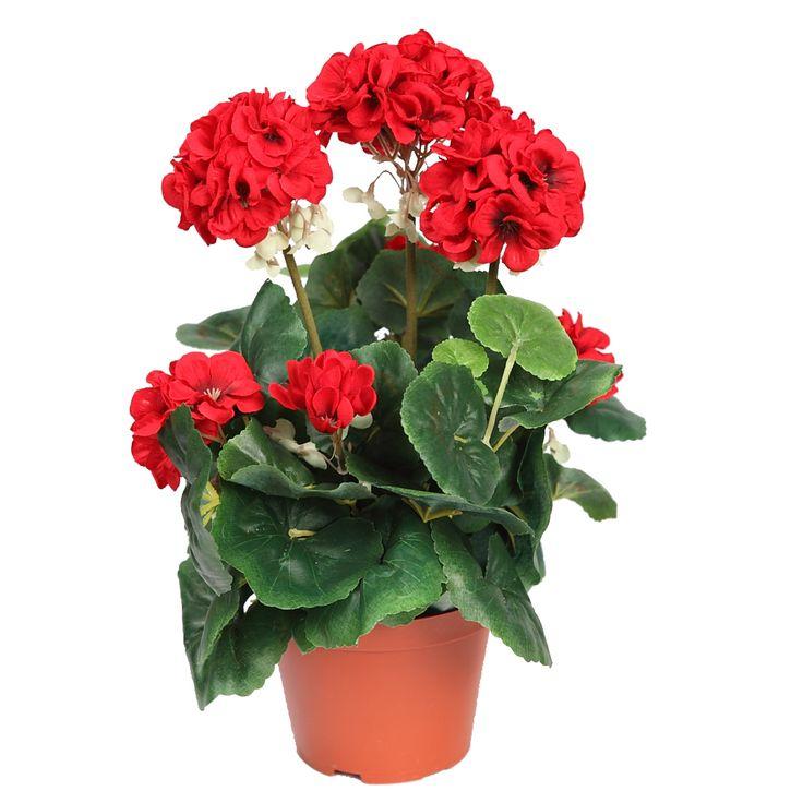 mejores 13 imágenes de plantas que florecen todo el año en