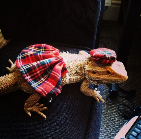 Amazing - Bearded Dragon Names For A Girl? | Bearded dragons