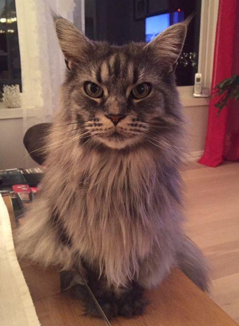 Tina's cat Missy