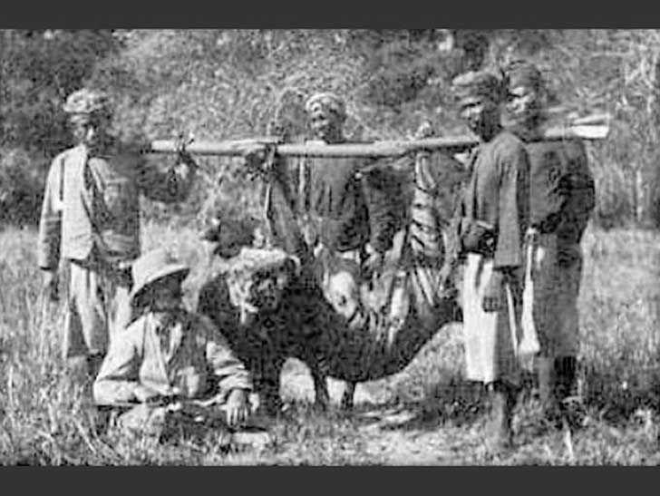 El tigre de Bali, La fotografía, tomada en 1913 una de las tres subespecies de tigre en Indonesia y la subespecie de tigre más pequeña de la historia.  El último tigre de Bali confirmado fue cazado en septiembre de 1937. La pérdida de hábitat y alimento a los humanos (en gran parte europeos, no el pueblo balinés) los llevó a la extinción. El tigre de Bali tenía un pelaje más corto y más oscuro que los otros tigres, y eran del tamaño de un leopardo o león de montaña.