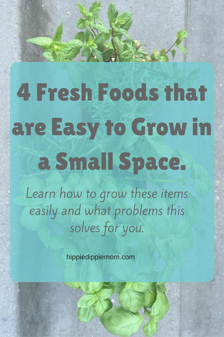 4 Fresh Foods that are Easy to Grow in a Small Space.