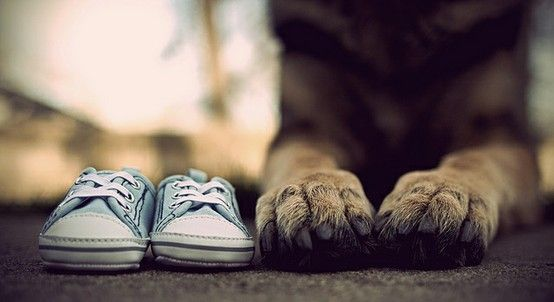 pregnancy announcement with dog. How precious! You could even have the dogs face in between the shoes :)