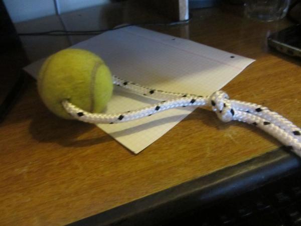 Cómo hacer juguetes caseros para perros - 5 pasos
