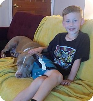 Seattle, WA - Pit Bull Terrier Mix. Meet Hertz, a dog for adoption. http://www.adoptapet.com/pet/17628892-seattle-washington-pit-bull-terrier-mix