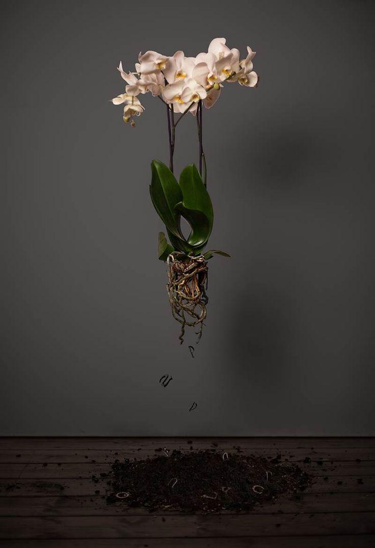 """""""White Orchid"""" 2012Autos SeriesC- Print120x80 cm"""