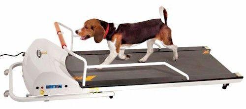 PetRun PR720F Dog Treadmill