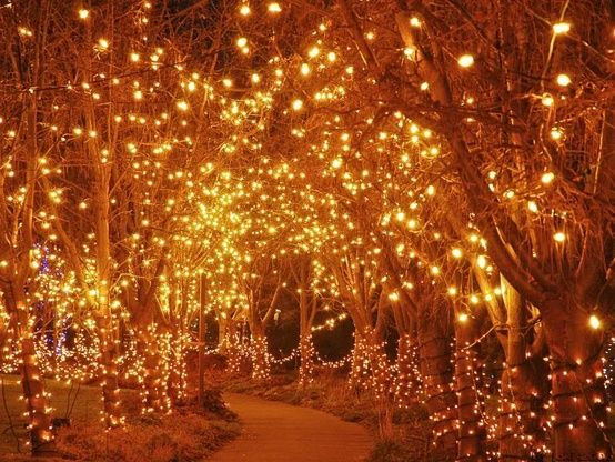 lights in trees! i love lights and trees!