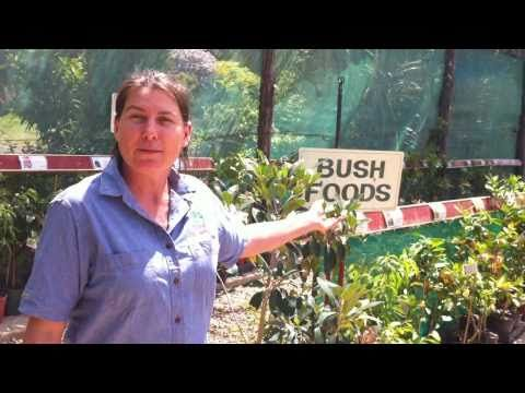 Contact Daleys Nursery Australia Learn About Daleys Nursery | Meet