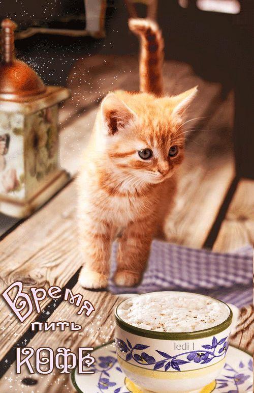 Доброе утро картинки с котятами и кофе и надписями, мне очень