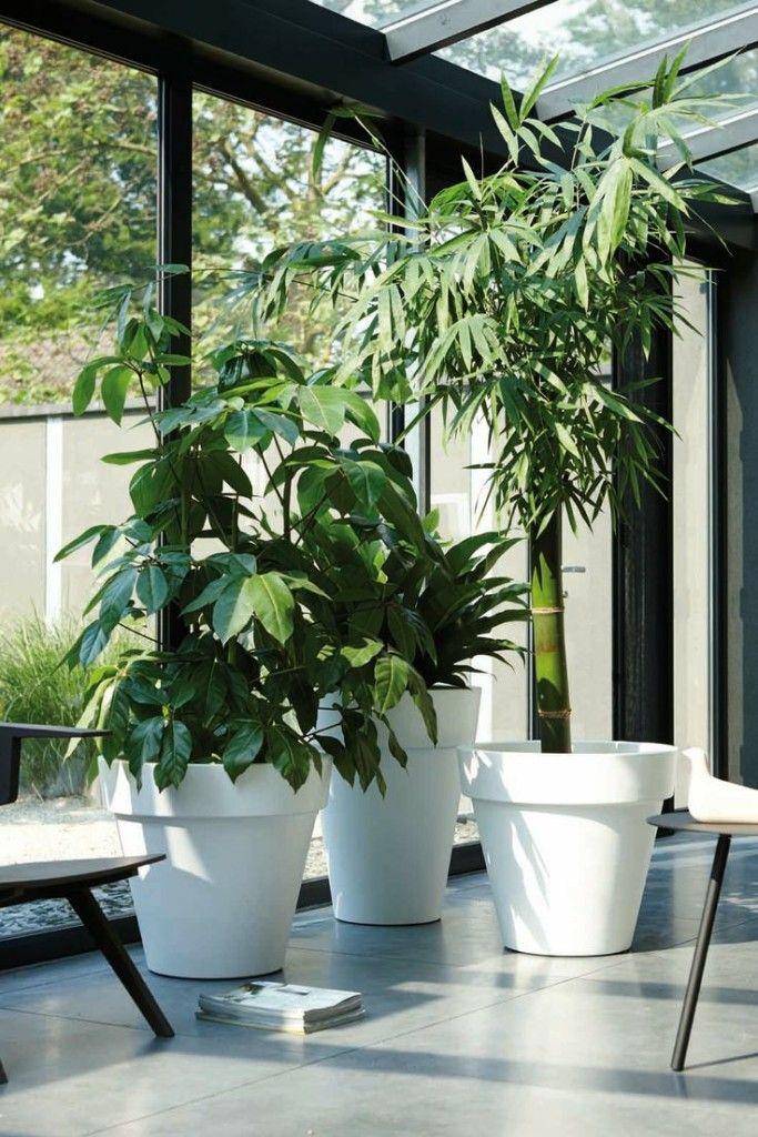 Pflanzen im Lobby - green&white