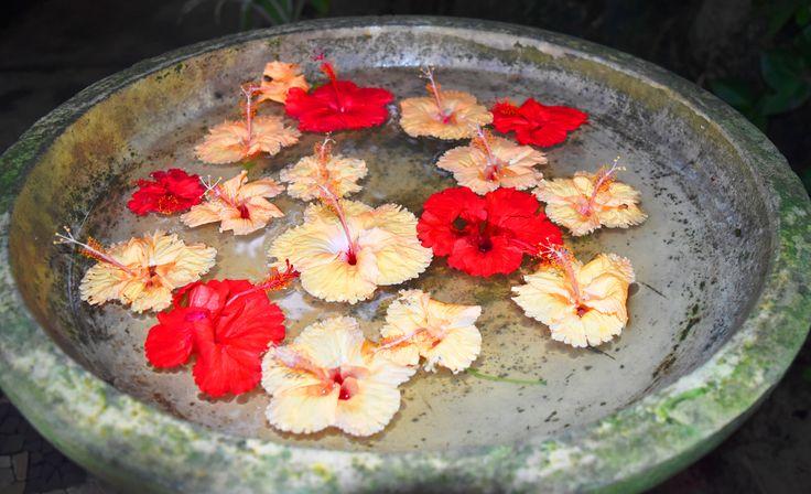 Flower bird bath next to Spa