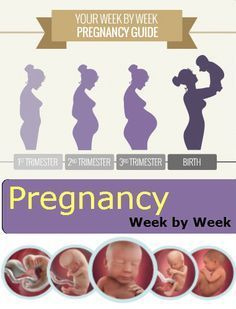 Pregnancy Week by Week – 1 to 40 Weeks Analysis by Stages :::::::::::::::: Pregnancy is the most wonderful feeling a woman experiences in her lifetime. It all starts with a missed periods and a rush of excitement follows. Symptoms like nausea and back ache are commonly seen in the first three months of pregnancy.