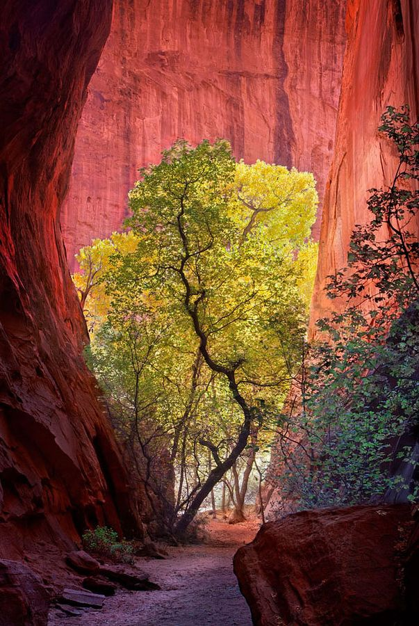 Slot Canyon, Escalante National Park, Utah