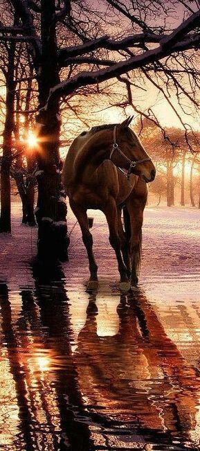 Magnifique dans un coucher de soleil magnifique je like ❤❤