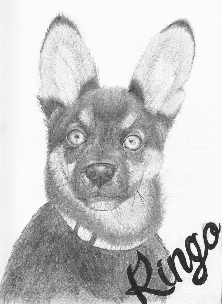 lobo perro dibujo a lapiz