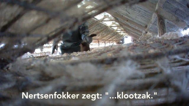 Dierenrechtenorganisatie Animal Rights heeft met verborgen camera's een bontfokker betrapt op het smijten met nertsen.  Tevens maakten zij unieke beelden van de langzaam stikkende nertsen in de gaskist. Animal Rights wil zo spoedig mogelijk een Vlaams verbod op de nertsenfokkerij.  https://www.animalrights.be/weg-met-bont