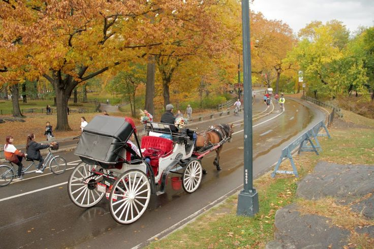 There is a lot that you can do with the New York City horse and carriage rides apart from just reveling in the vintage luxury. The rides are available for tours of the park, the City of New York, and even some private events and requirements.