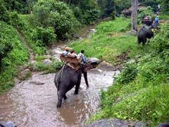 Elephant Trekking in Krabi, Thailand...what an amazing trip! This started my facination with elemphants!