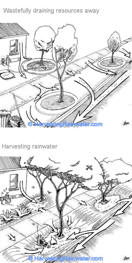 Clever ideas on harvesting rainwater (Street orchards, rain gardens & curbcuts) by Brad Lancaster