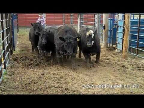 Starting a Cattle Operation From Scratch