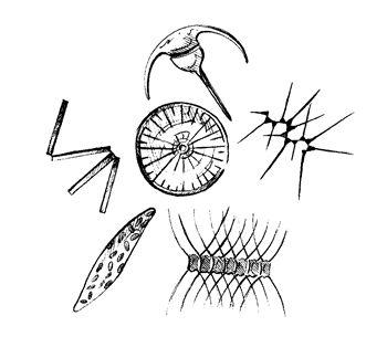 sea plankton coloring pages - photo#36