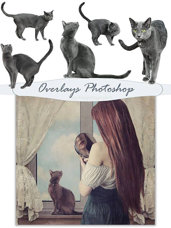 Overlays,photo overlays,overlays Photoshop,cats, cat overlay, photography, PSD,PNG