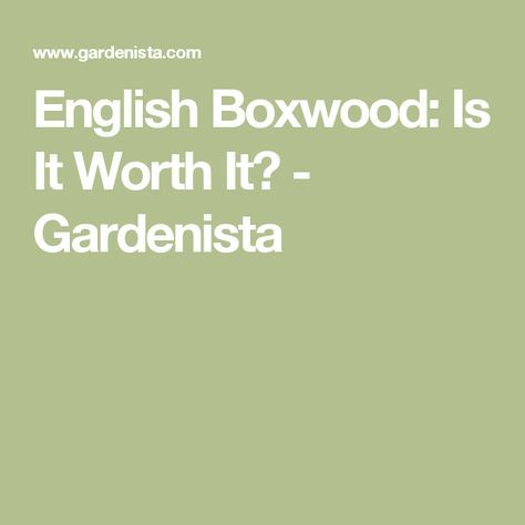 English Boxwood: Is It Worth It? - Gardenista